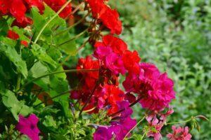 Blühpflanzen ausputzen