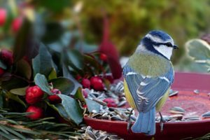 Vögel im Garten füttern